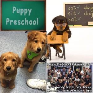 Puppy pre school
